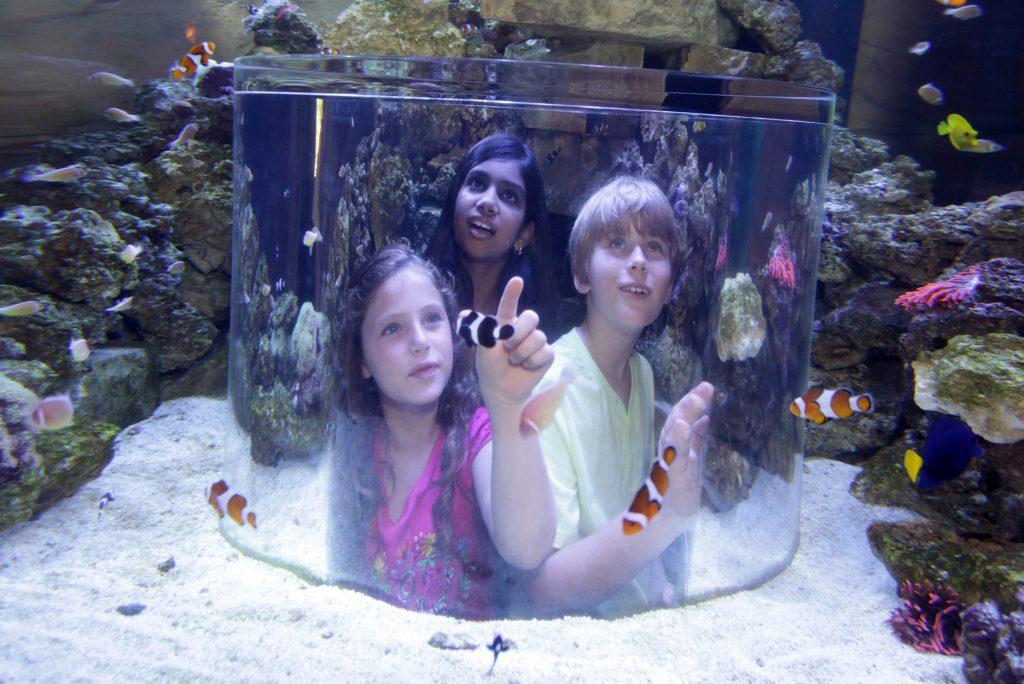 Manta Aquarium, SeaWorld Orlando