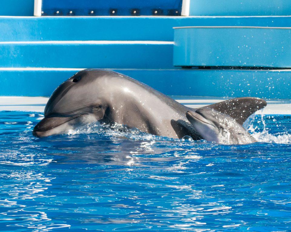 Bottlenose baby born at SeaWorld California