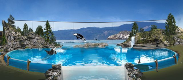 SeaWorld announces last generation of orcas in its care